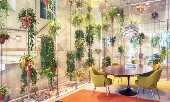 Décoration murale et plantes pour le bien être au travail